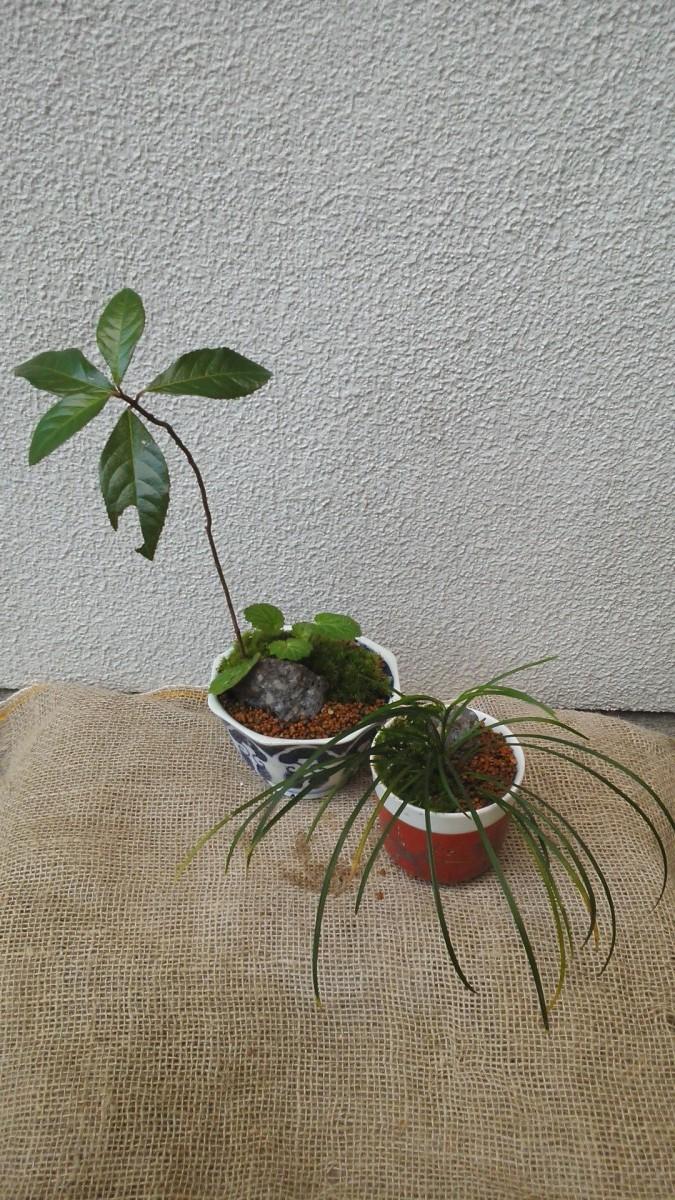 小さな盆栽づくりワークショップ