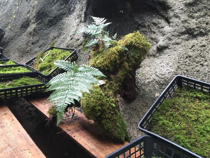 苔むす自然木の販売