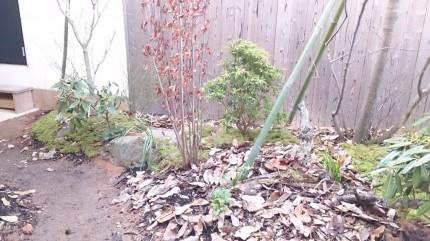 大澤の杜「四季を感じられる庭空間」大澤邸 落葉装飾敷き