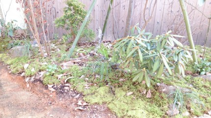 大澤の杜「四季を感じられる庭空間」マウンド苔張り仕上げ