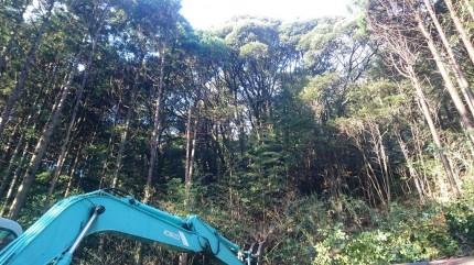 杉・檜林の間から雑木林が見え隠れ