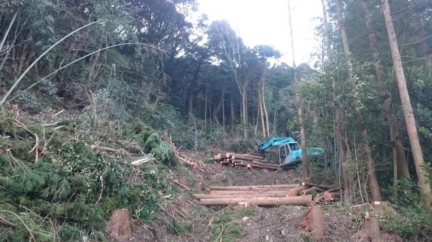 雑木林再生計画
