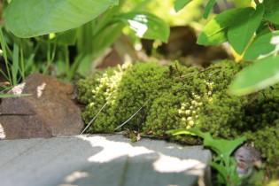 畑の杜「木々に囲まれた自然な庭空間」スナゴケ